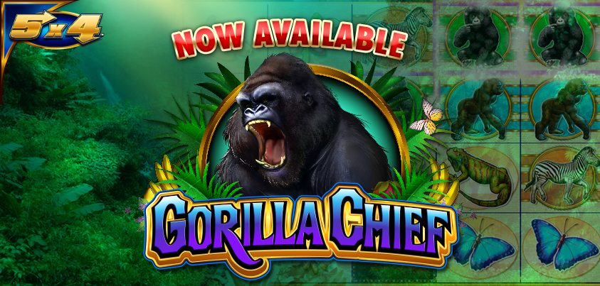 GorillaChief-843-x-403-2