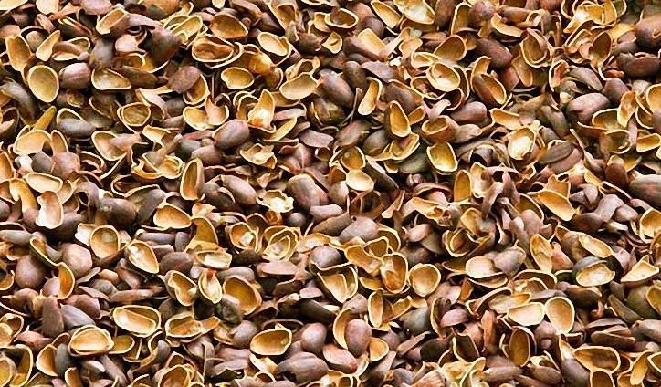 Полезные свойства скорлупы кедрового ореха