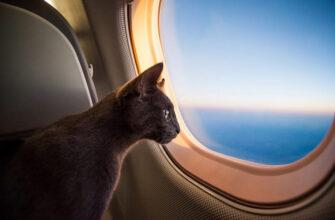 Что нужно знать о перевозки животного в самолете